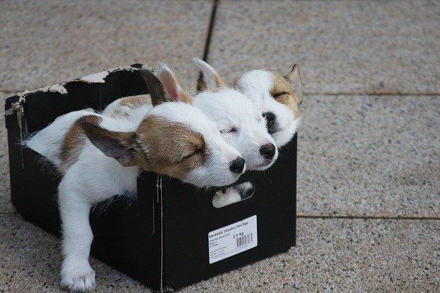 spiace šteniatka